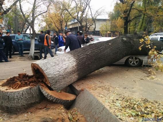 Аварийное дерево упало на ваш автомобиль