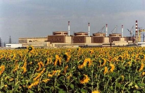 Балаковская АЭС в подсолнухах фото