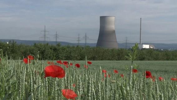 Маки на фоне АЭС Мюльхайм Керлих. Германия