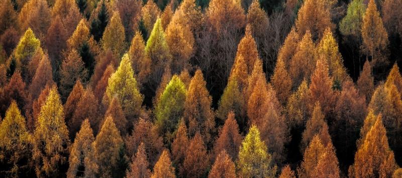 Радиоактивный лес рыжий в чернобыле