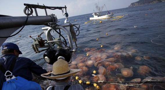 Шведские рыбаки вылавливают медуз возле АЭС Оскархамн - копия